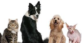 Réglementation sur la divagation des animaux
